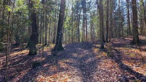 Walk through the spring forest