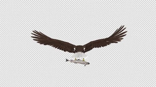 Bald Eagle with Salmon Fish - 4K Flying Loop - Back View