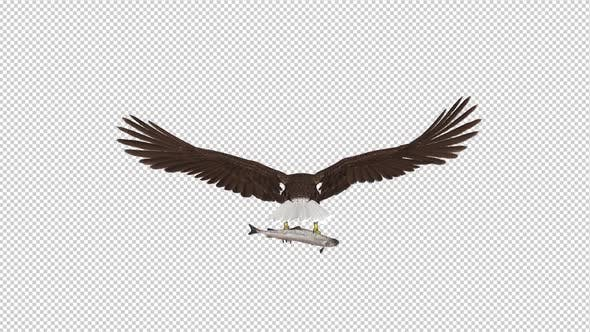 Cover Image for Bald Eagle with Salmon Fish - 4K Flying Loop - Back View