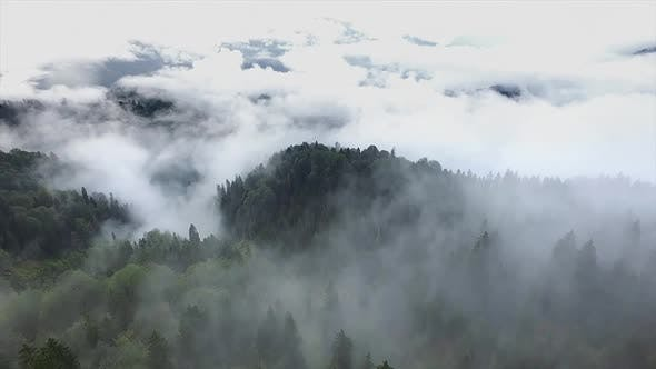Flying Above the Clouds And Forest