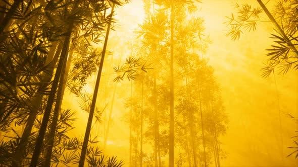 Asiatischer Bambuswald mit Morgenne