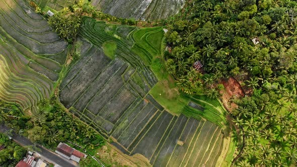 Thumbnail for Jatiluwih Rice Terraces Bali