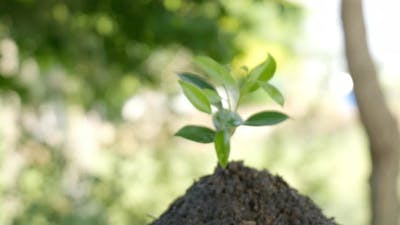 The seedlings with Green leaf in the soil