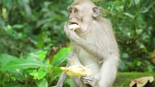 Monkeys Forest Bali