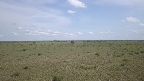 Savannah Pantanal Dry Season Termite Mounds in Brazil