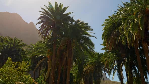 Tall Palm Trees in an Oasis