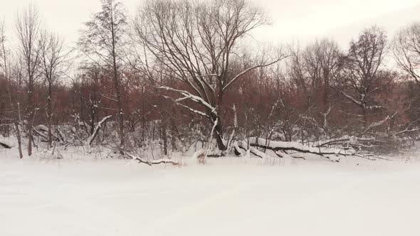 Thumbnail for Flying Over Frozen River