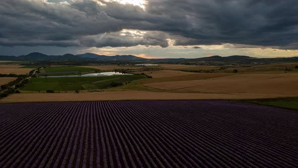 Lavender Plantings Aerial Hyperlapse Landscape