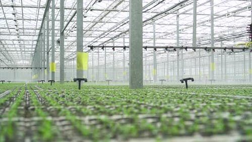Hydroponic Greenhouse View of Watering Green Vegetables Using Modern System at Agro Company Spbd