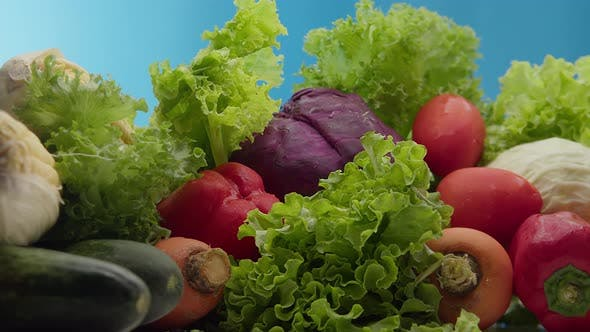 Fresh Vegetables Just Picked From Garden Bed with Water Drops on the Blue Background Agriculture
