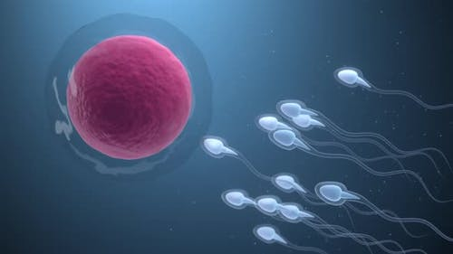 The union of sperm and an egg cell