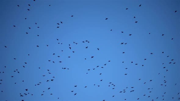 Thumbnail for Jumble Flying Birds In The Blue Sky