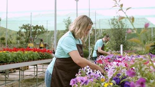 Serious Caucasian Gardeners Working in Hothouse