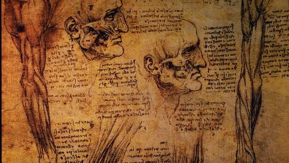 Thumbnail for Anatomy Art Drawing