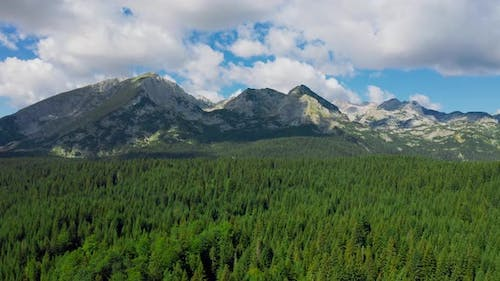 Summer Landscape in Mountains with Pine Forest and the Dark Blue Sky with Clouds in Durmitor
