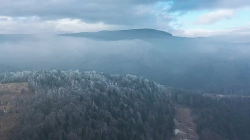 Flying Over a Fabulous Winter Forest the Trees Are Covered with Frost the Fog Swirls Over the