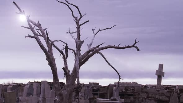 Thumbnail for Old Abandoned Cemetery with a Dry Tree.