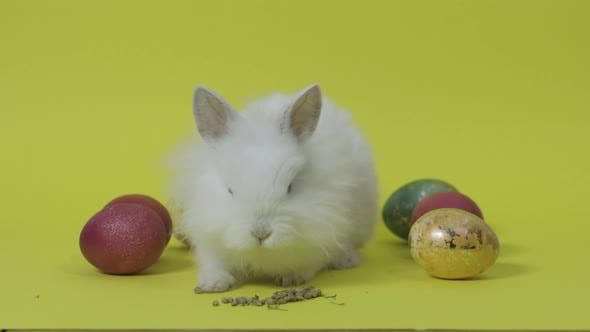 Thumbnail for Easter Bunny Eat Feed Between Eggs. Yellow Background. Easter Holiday Concept