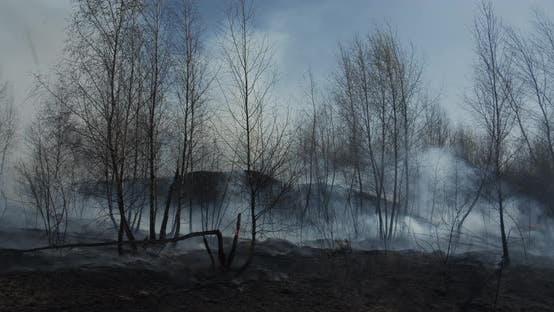 Spring Forest Fires In Ukraine