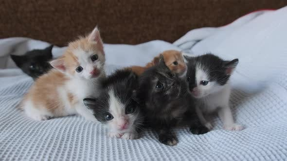 Thumbnail for Six Newborn Little Kittens Crawling on White Background. Group of Cute Kittens