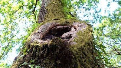 Climbing a Tree with Hole