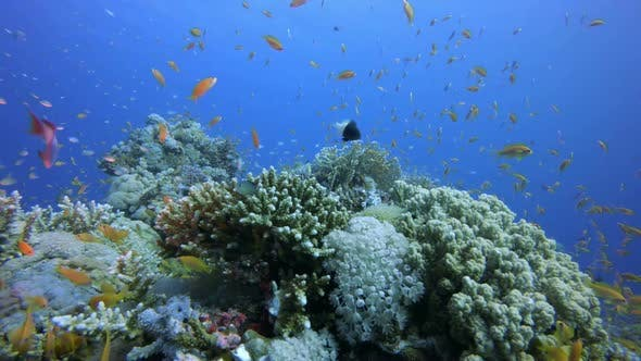 Cover Image for Coral Reef Scene