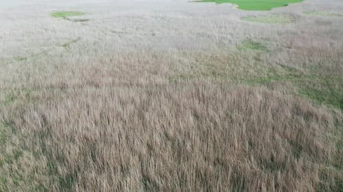 Aerial View of a Thicket of Reeds