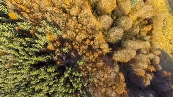Thumbnail for View From Above Over Colorful Autumn Forest