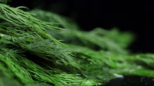 Aromatic Fresh Bunch of Dill for the Salad.