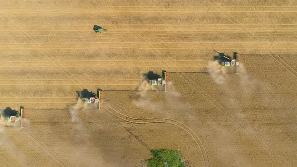 Combine Harvesting. Aerial View of Agricultural Machine Collecting Golden Ripe Wheat on the Field