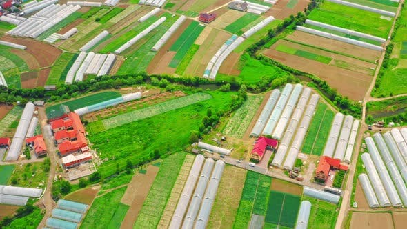 Thumbnail for Drone Flies Above Hothouse Growing Greenery