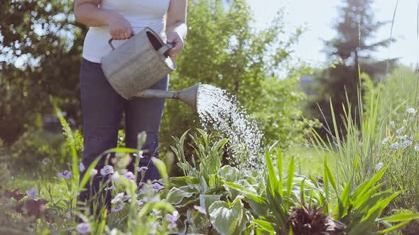 Young woman watering plants with a watering can
