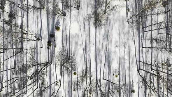 Thumbnail for Winter Forest Landscape and Sunset, Snow Winter Trees, Beautiful Nature, Aerial View