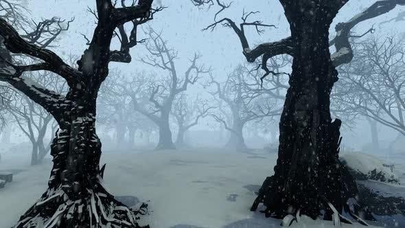 Old Park During Snowfall