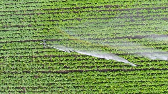 Thumbnail for Aerial Shot of the Green Fields Being Irrigated with Sprinklers. Large Scale Industrial Farming
