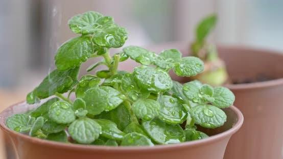 Thumbnail for Green Plant Pot