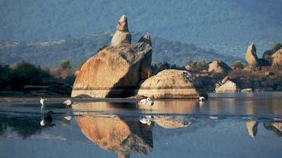 Flamingos on the Lake with Natural Ruins
