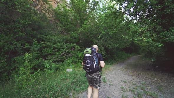 Tourist mit einem Rucksack in Shorts und einem T-Shirt geht auf einem Weg im Wald