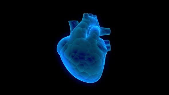 Heart 360 Loopable