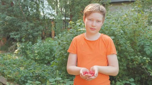 A Boy Holds and Then Holds Out a Handful of Ripe Red Raspberries