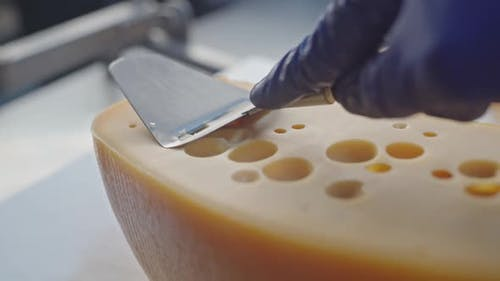 Cheesemaker in Uniform and Blue Glowes Removes a Sample of Cheese at the Factory
