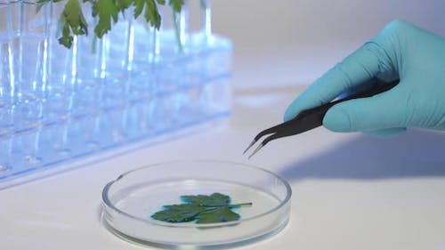 Professional Scientist Wearing Protective Mask Working with Herb Samples in His Laboratory