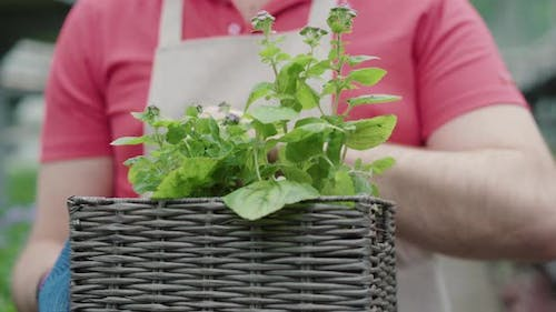 Close-up of Male Caucasian Hands Checking Flowers in Basket. Unrecognizable Mid-adult Man Working in