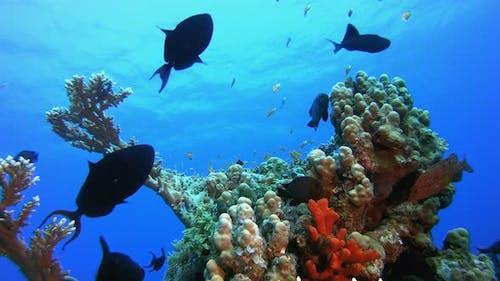 Underwater Life Fish