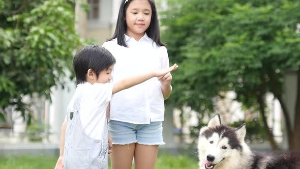 Happy Asian Children Playing With Siberian Husky Dog In The Garden