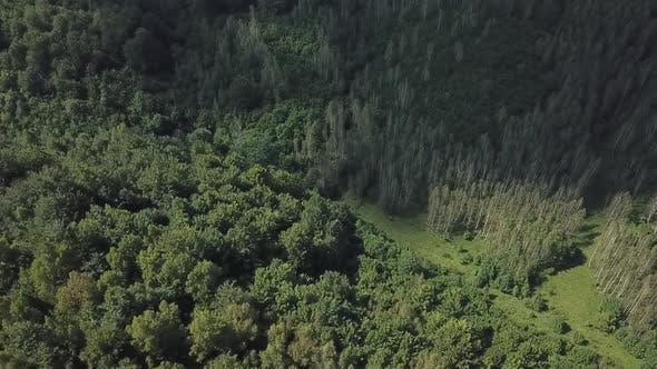 Forest Aerial View V2