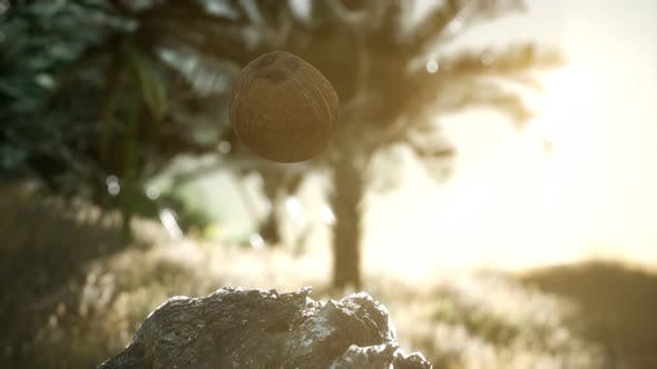 Thumbnail for Extreme Slow Motion Falling Coconut in Jungle