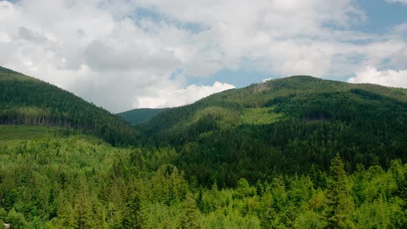 Thumbnail for Aerial Drone View. Green Pine Forest with Canopies of Spruce Trees in Summer Mountains.