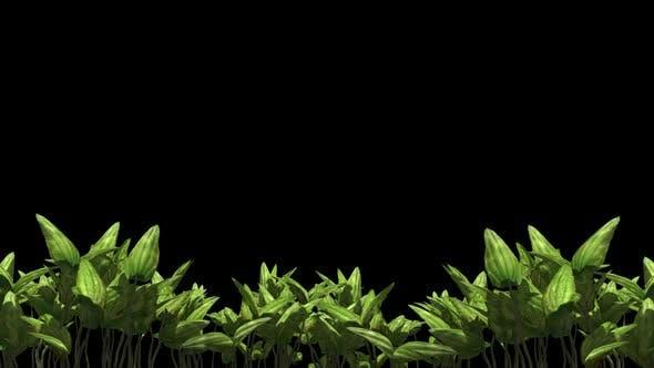 Thumbnail for Plants
