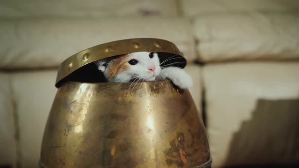 Cover Image for Cool Playful Cat Gets Out of the Jug. Funny Pets